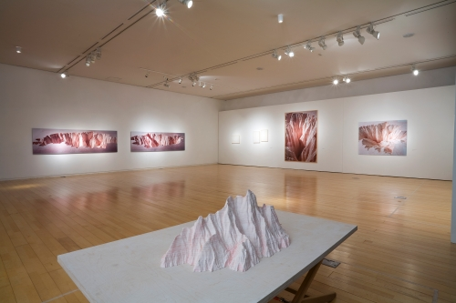 Absurd Sight:Trifocal Sight, installation view
