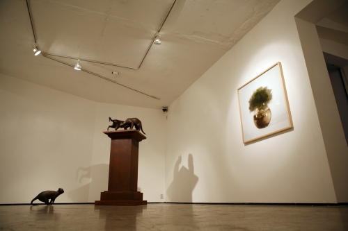 Descriptive Sight, installation view